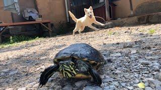 거북이와 강아지가 만나면? Turtle and Dog