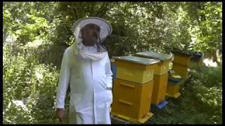 dla mnie pszczoły  to jest życie- Tadeusz Konopa