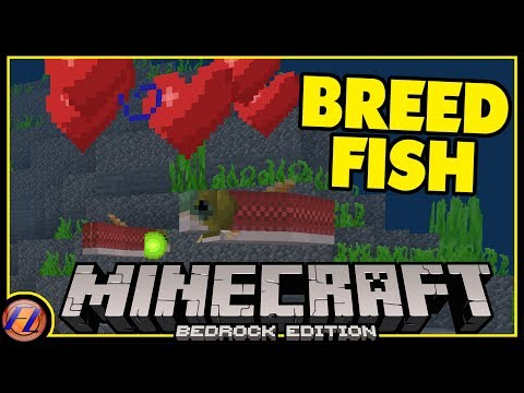 How To Breed Fish And Dolphins In Minecraft Bedrock?