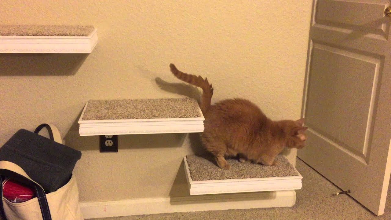 Cat Wall Steps Munchkin Style Youtube