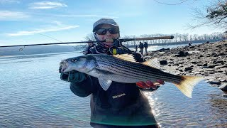 Light Tackle Striped Bass Fishing at the Housatonic River