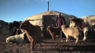 Punainen Risti auttaa paimentolaisia Mongoliassa