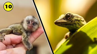 List Of Top 10 Smallest Animals In The World | 10 ABNORMALLY Smallest Animlas On World