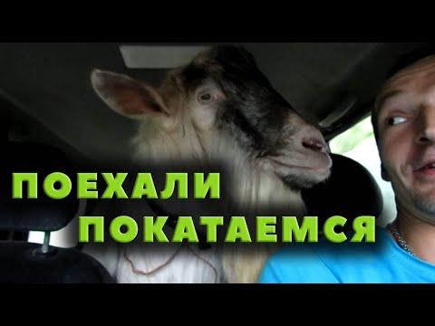 Поехали! К коровам, в Красновку и Краину Мар!
