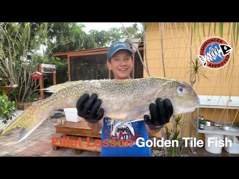 How To Fillet Golden Tile Fish