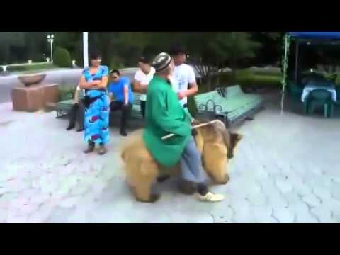 Верхом на медведе