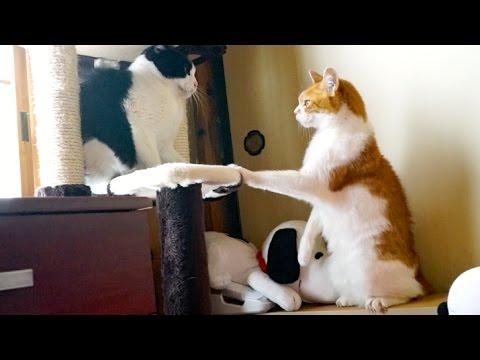 雄猫の喧嘩を止める雌猫