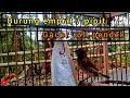 Burung Emprit Pipit Gacor Roll Pendek  Mp3 - Mp4 Download