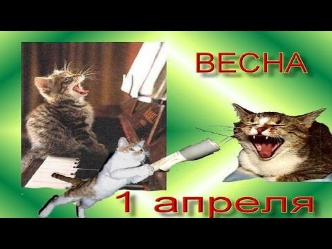 Смешные кошки . Поздравления с 1 апреля ! - Ржачные видео приколы