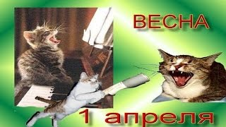 Смешные кошки . Поздравления с 1 апреля !