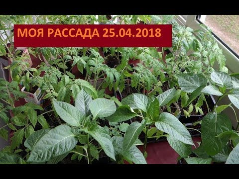 Глафира тарханова дети фото 2018