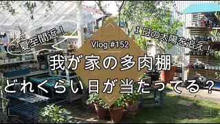 【Vlog152】【多肉植物】夏至間近!多肉棚どれくらい日が当たってる?1日の太陽を追え!夏越し・遮光のコツ【日向・日陰・半日蔭】