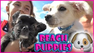 PUPPIES FIRST TRIP TO THE BEACH | We Are The Davises