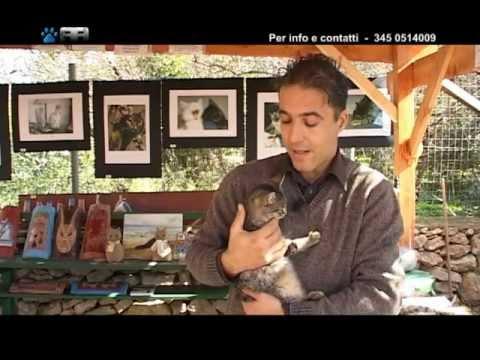 ANIMA ANIMALE – 2ª Puntata – 1ª Parte (Programma TV) – Tancri Produzioni