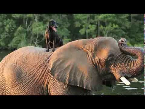 Dog and Elephant Friends Play Catch Together