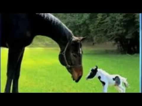 les plus petits et les plus grands chevaux du monde youtube. Black Bedroom Furniture Sets. Home Design Ideas