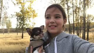Гуляем без поводка)) Как научить собаку не убегать.