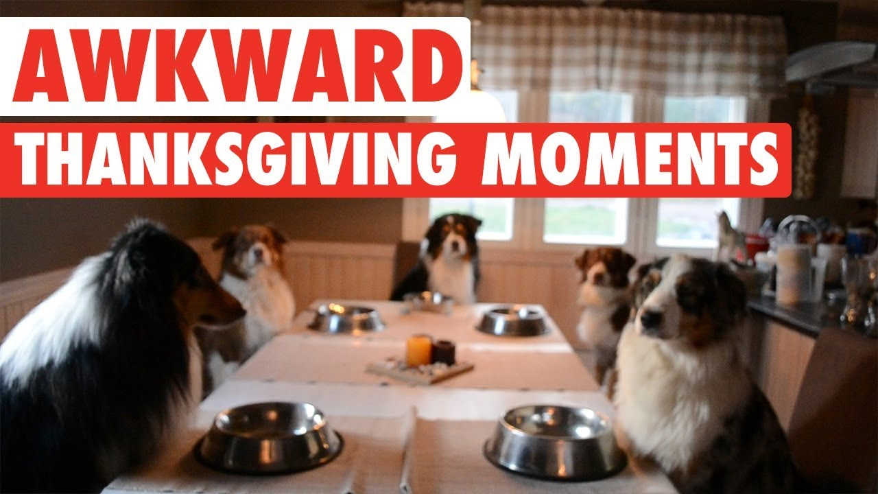 Most Awkward Thanksgiving Moments As Told By Pets