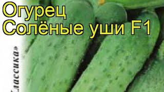 Огурец Солёные уши F1. Краткий обзор, описание характеристик, где купить семена cucumis sativus