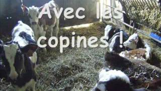 Ma vie de vache - LEGTA Fouesnant