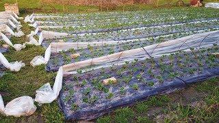 видео Как выбрать насос для полива огорода или дачного участка из бочки или водоема