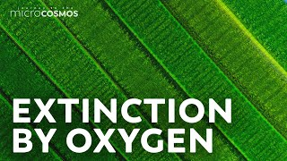 How Cyanobacteria Took Over The World