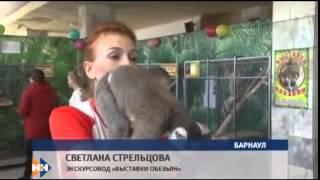 Выставка Обезьян Барнаул 2015