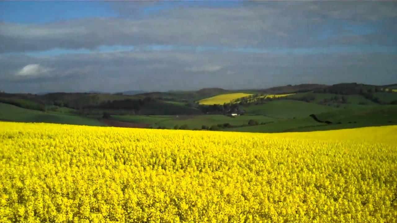 Yellow Fields Moonzie Fife Scotland - YouTube
