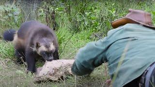 가장 겁 없는 동물들