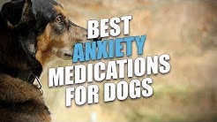 Best Anxiety Medications for Dogs