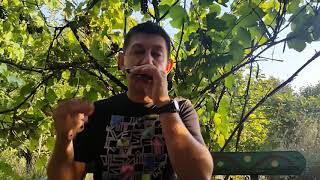 Импровизация на губной гармошке. Вступление. Урок № 25. How to play the blues on the harmonica