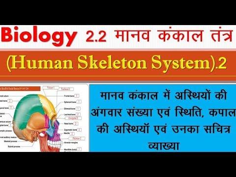 Human skeleton system2|| Biology || मानव कंकाल तंत्र|| Structure & Functions of skeleton