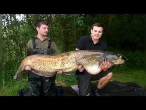 MY NEW PERSONAL RECORD CATFISH MONSTER 8.6 FEET - 265 LBS - HD by CATFISHING WORLD from YouTube · High Definition · Duration:  11 minutes 17 seconds  · 86,000+ views · uploaded on 9/10/2015 · uploaded by Catfish World by Yuri Grisendi