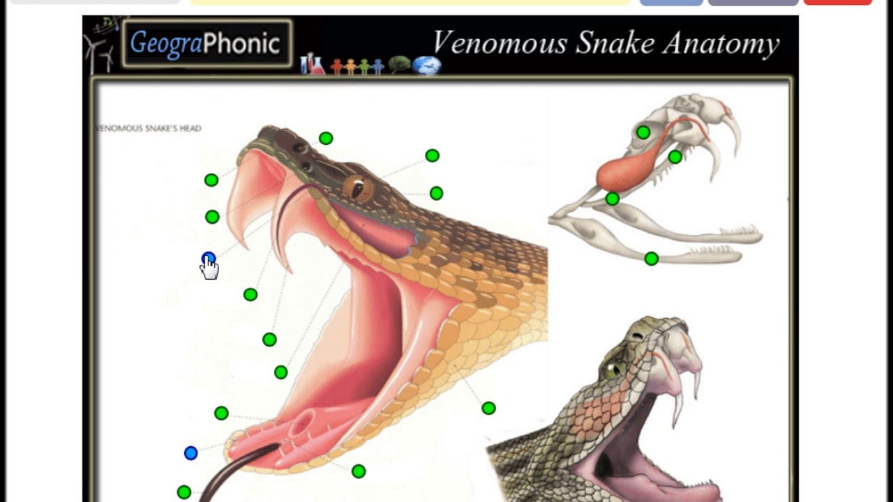 Venomous snake anatomy, game for school and biology and wildlife ...