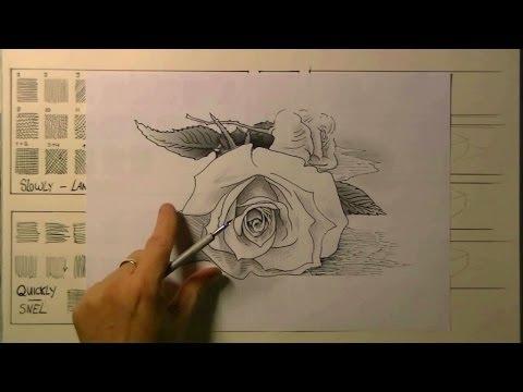 ROOS tekenen met pen en inkt - voor beginners
