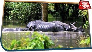 Assam Floods: 70% Of Kaziranga National Park, 95 Camps Submerged