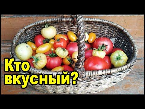Самые вкусные сорта томатов в теплице. Лучшие сорта томатов.