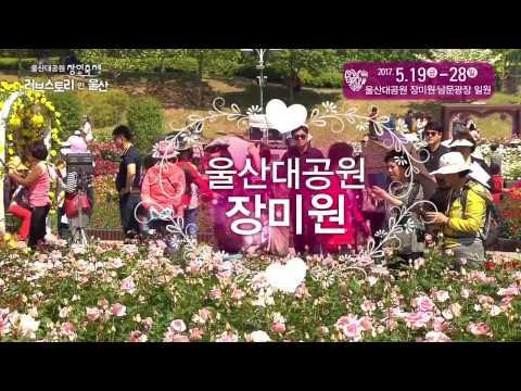 [울산시] 2017년 울산대공원 장미축제(5월19일~5월28일)