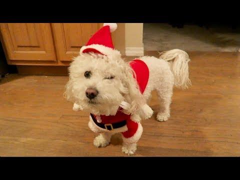 Toy Prank On My Dog Doovi