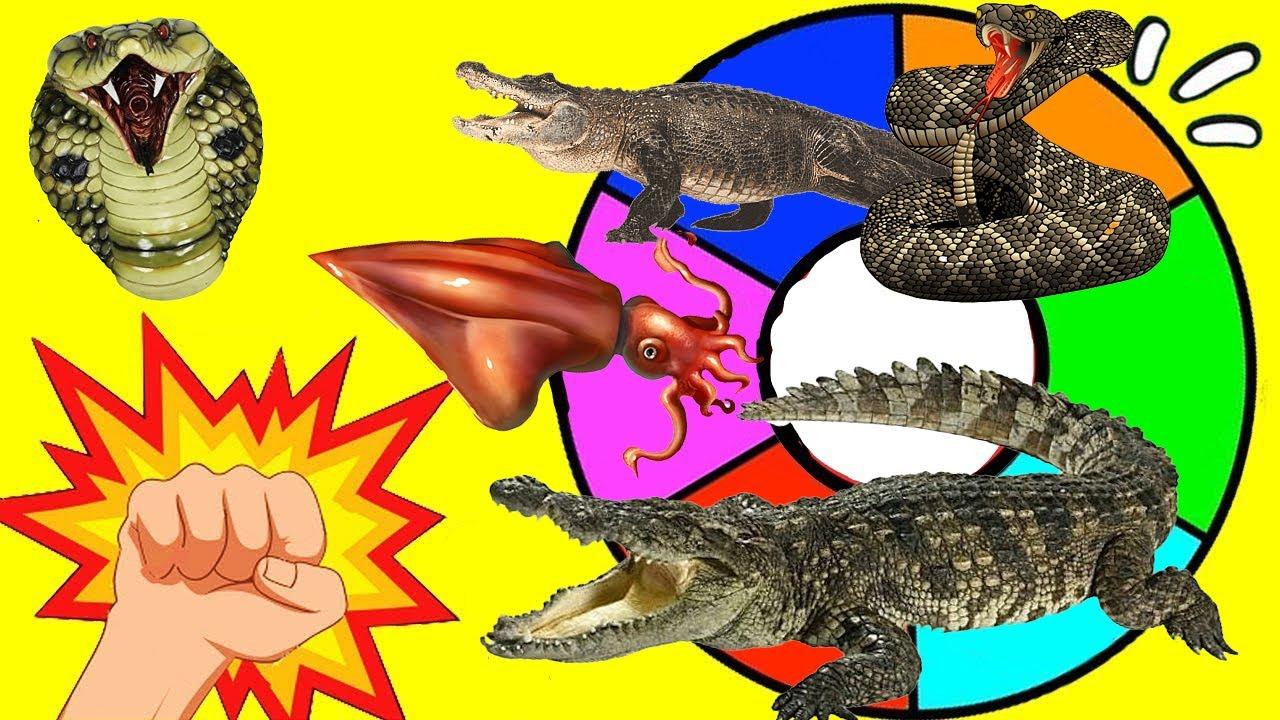 RULETA SORPRESA de GRANDES REPTILES | Los Reptiles más Terroríficos | CAIMAN, COCODRILO, COBRA REAL