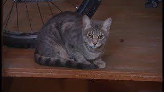 Друг семьи. «Пятнистая серая кошка»