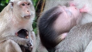 Video Poor Oldest Mama Kayoy Hug Newborn Baby Kaya Looking So Hungry Food Try To Sit Near Dad Pigtail Ajoy download MP3, 3GP, MP4, WEBM, AVI, FLV Oktober 2018
