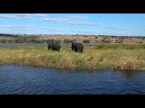 Olifanten spotten vanaf de boot