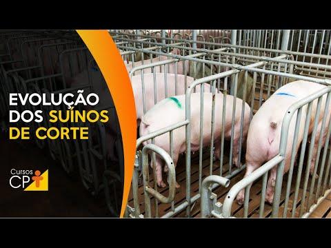Clique e veja o vídeo Desenvolvimento evolutivo dos suínos de corte