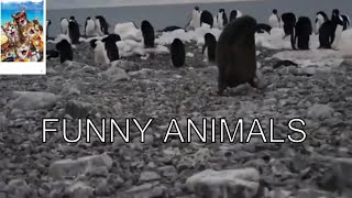 Funny Animal Fail Compilation 2020