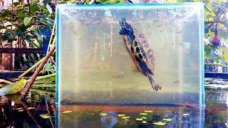 How to make an up-side-down fish tank (Làm bể cá lộn ngược theo cách của bác nông dân)