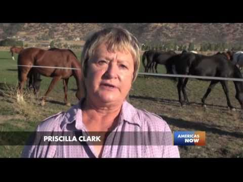 Racing For Their Lives: An In-Depth Look At Doping In The U.S. Horse Racing Industry