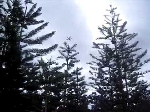 Windy on Norfolk Island