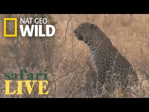Safari Live - Day 21 | Nat Geo WILD