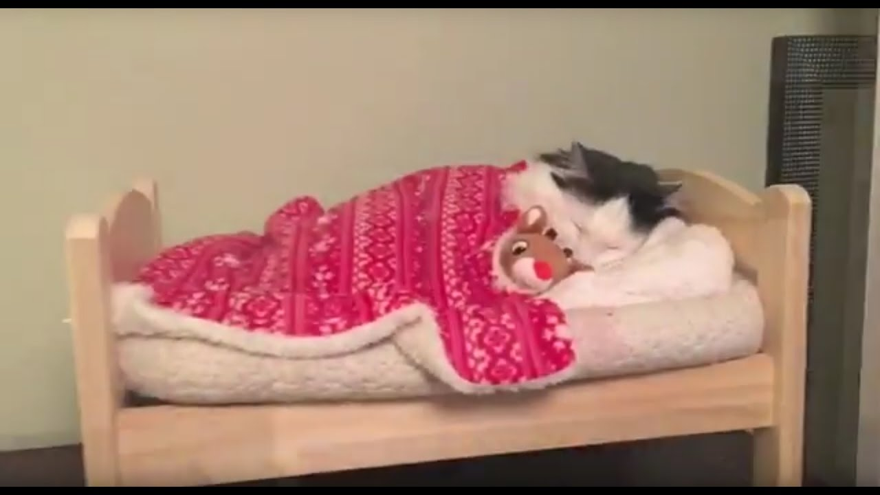 Cat Puts Herself To Sleep In Tiny Human Bed Youtube